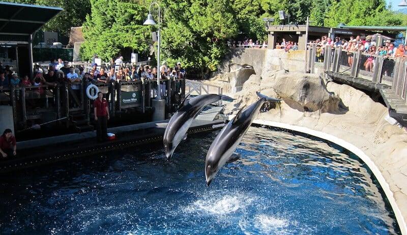 O Que Fazer em Vancouver no Canadá: Vancouver Aquarium