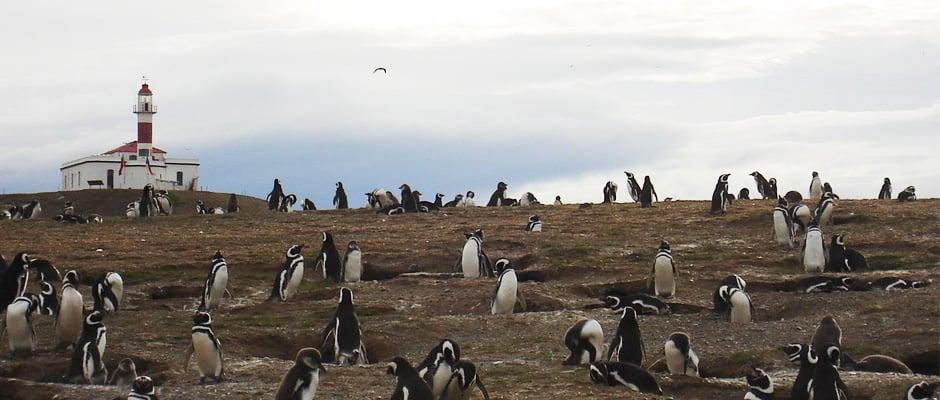 Conhecer a Ilha Magdalena em Punta Arenas
