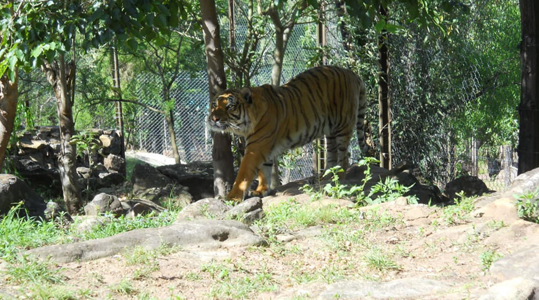 O Que Fazer Em Salto: Passear pelo Zoológico Municipal de Salto