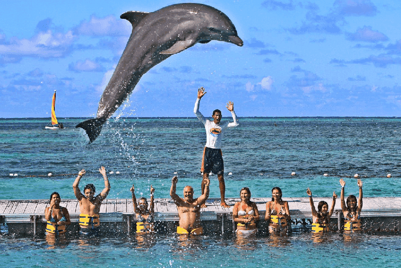 O Que Fazer em Punta Cana no Caribe: Dolphin Island