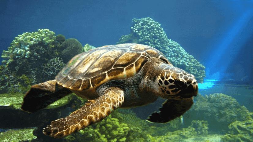 O que fazer em Aracaju: Oceanário