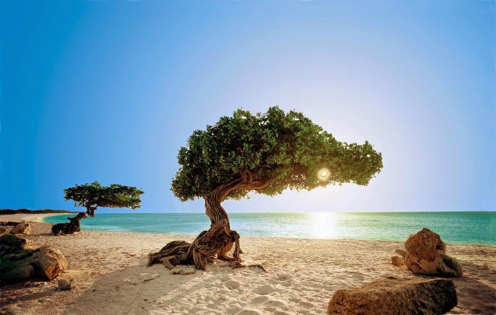 O Que Fazer em Aruba no Caribe: praias