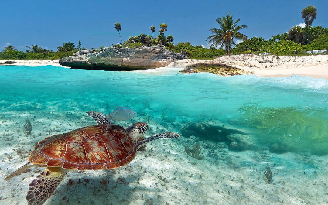 O Que Fazer em Playa del Carmen no México