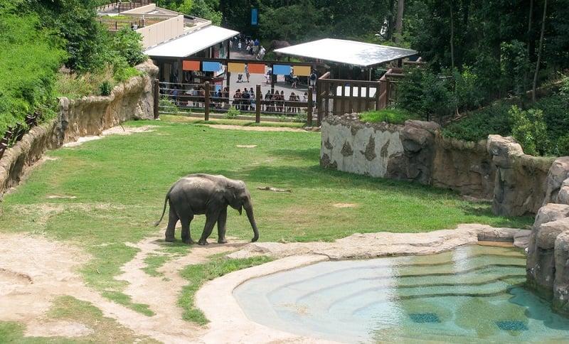 O que fazer em Washington: Smithsonian National Zoo