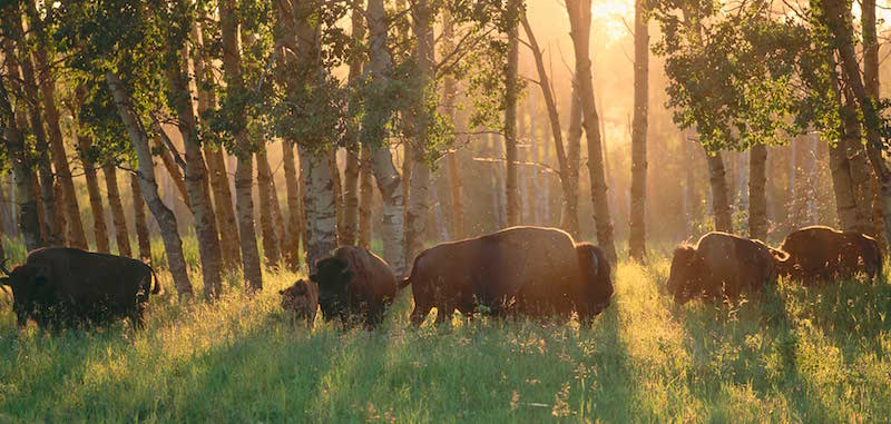 O Que Fazer em Edmonton: Parque Nacional Elk Island