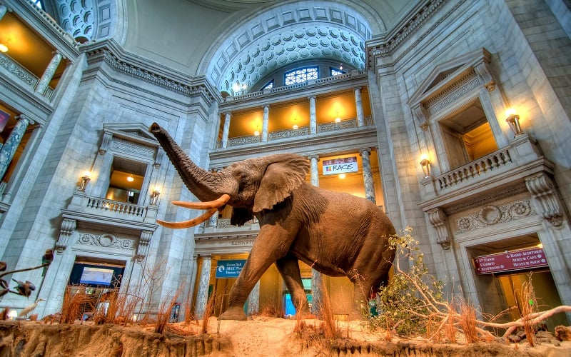 O que fazer em Washington: Museus em Washington