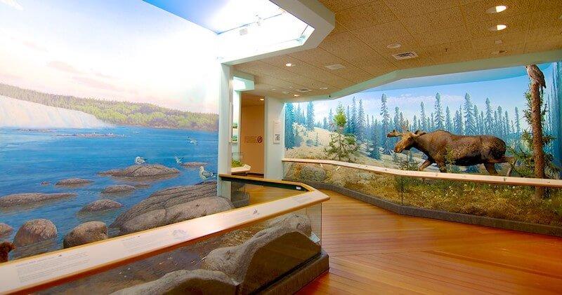 O Que Fazer em Regina no Canadá: Royal Saskatchewan Museum