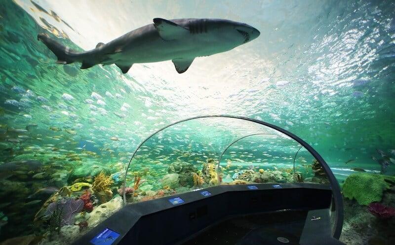 O Que Fazer em Toronto no Canadá: Ripley's Aquarium of Canada