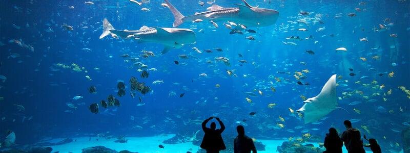 O Que Fazer em Atlanta: Georgia Aquarium