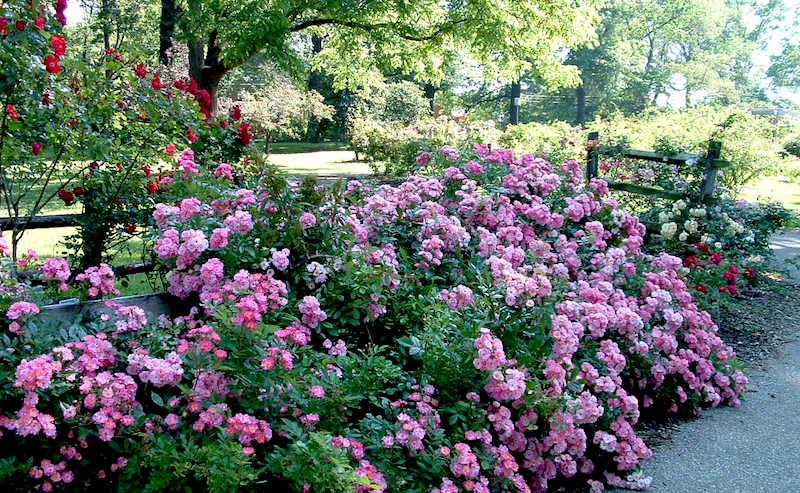 O Que Fazer em Columbus: Whetstone Park/Park of Roses