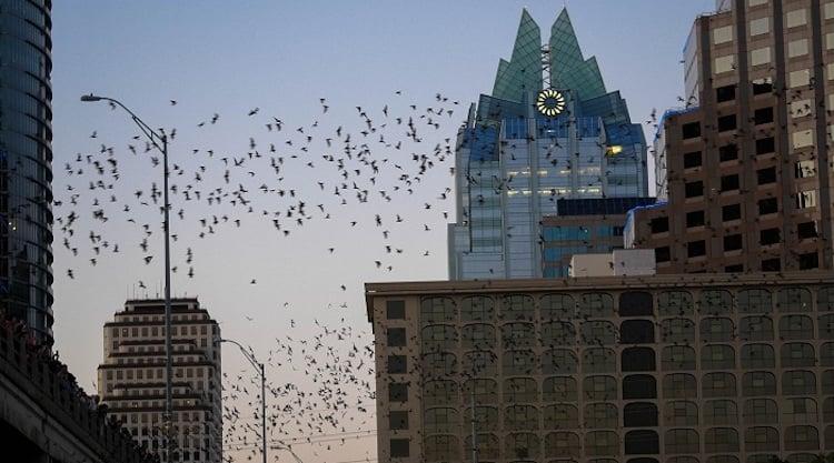 O Que Fazer em Austin: Morcegos de Austin