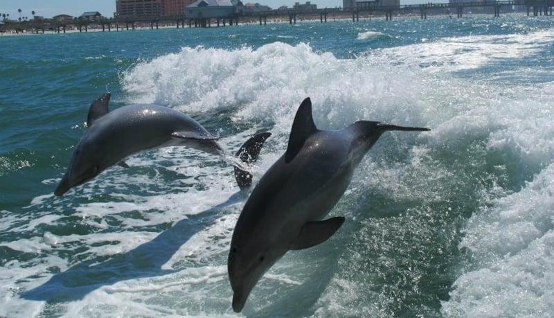 O Que Fazer em Clearwater: Passeio de barco