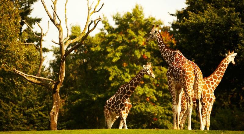 O Que Fazer em Jacksonville: Jacksonville Zoo and Gardens