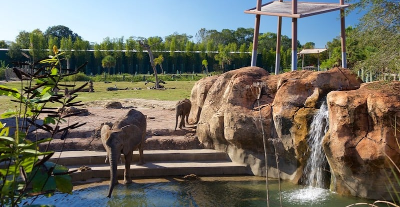 O Que Fazer em Tampa: Lowry Park Zoo Tampa