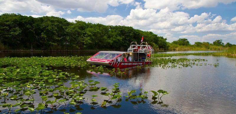 O Que Fazer em Fort Lauderdale: Airboat Ride