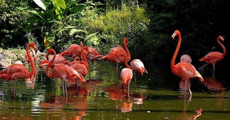 O Que Fazer em Fort Lauderdale: Flamingo Gardens