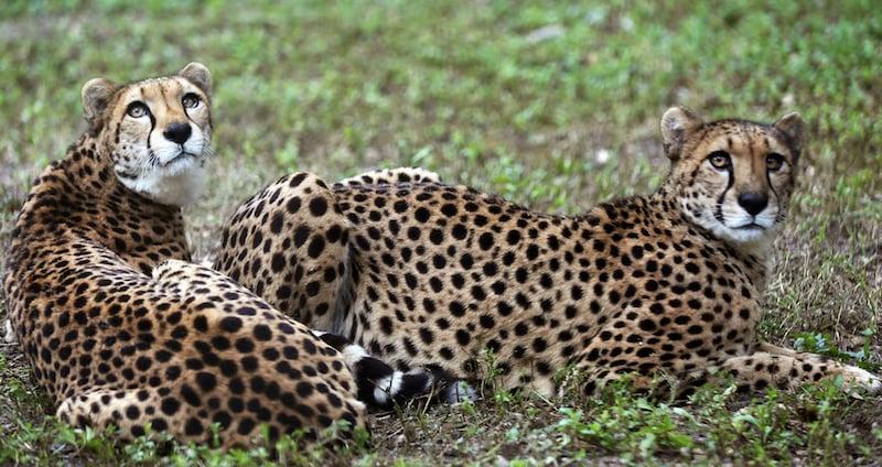 O Que Fazer em Naples: Naples Zoo