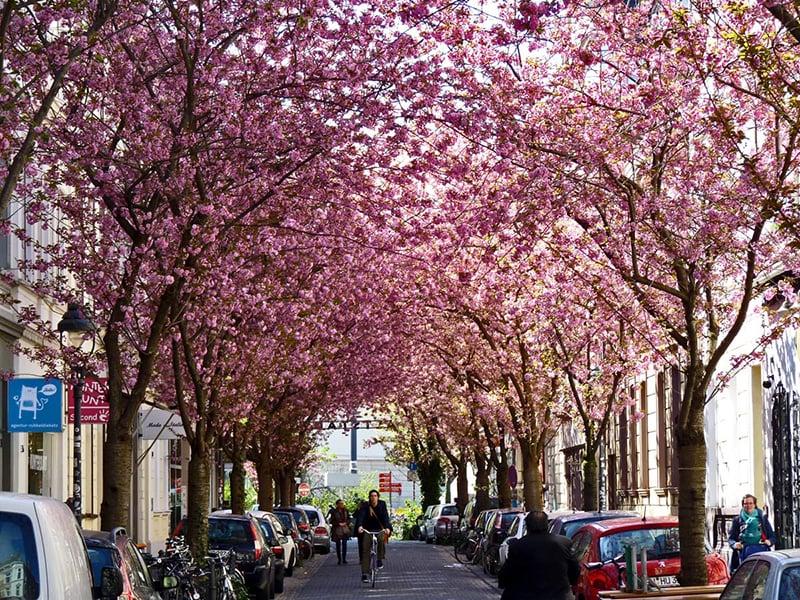 O que fazer em Colônia: Bonn