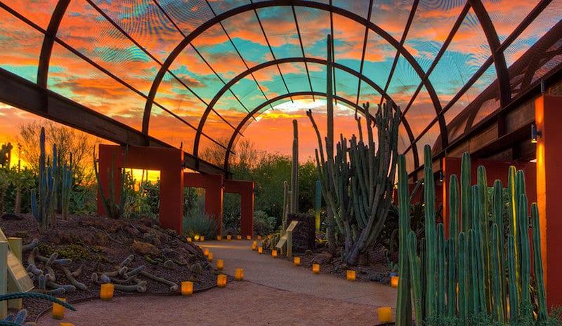 O Que Fazer em Phoenix: Desert Botanical Gardens