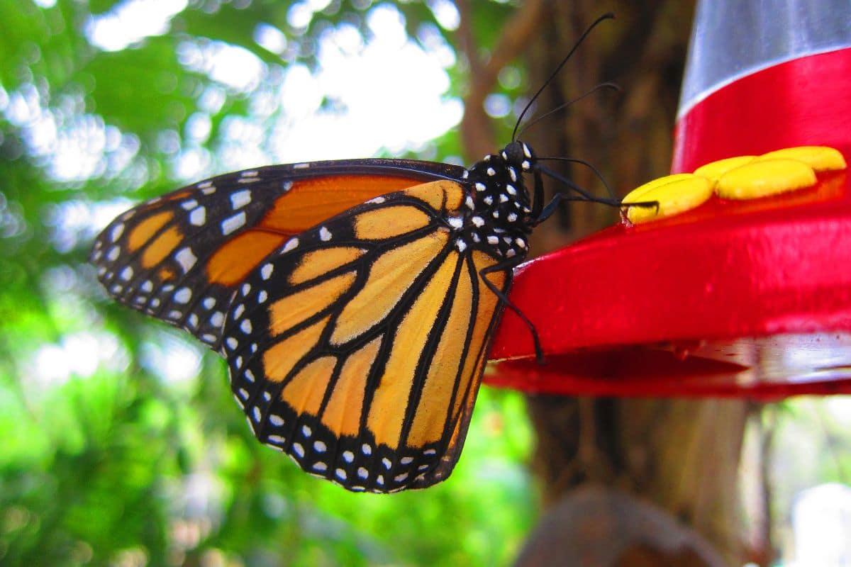O Que Fazer em St. Maarten e St. Martin: Butterfly Farm