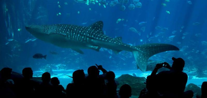 O Que Fazer em Carmel: Monterey Bay Aquarium