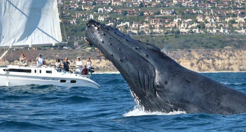O Que Fazer em Laguna Beach: Passeio de barco