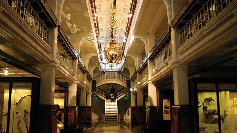 O que fazer em Manchester: Museu de Manchester