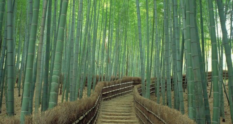 O Que Fazer em Kyoto: Arashiyama