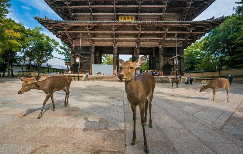 O Que Fazer em Osaka: Nara