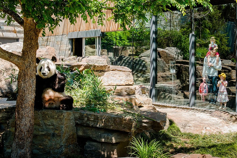 O que fazer em Adelaide: Zoológico
