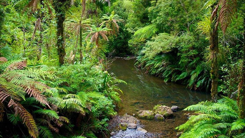 O que fazer em Auckland: Parque Waitakere Rangers