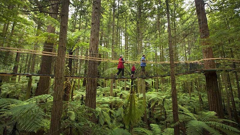 O que fazer em Rotorua: Redwoods