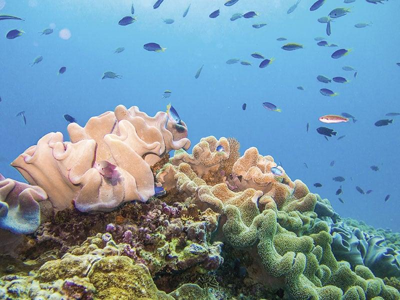 O que fazer em Whitsundays: Butterly Bay