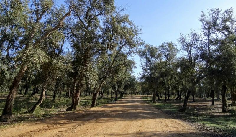 O Que Fazer em Rabat: Floresta Maâmora