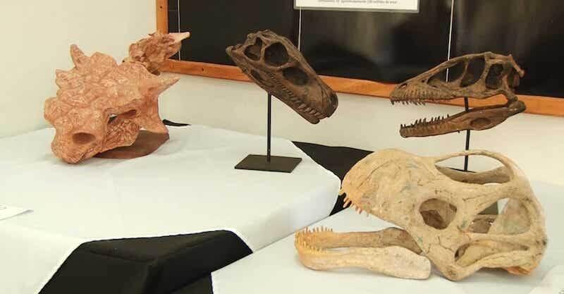 O Que Fazer em Marília: Museu de Paleontologia