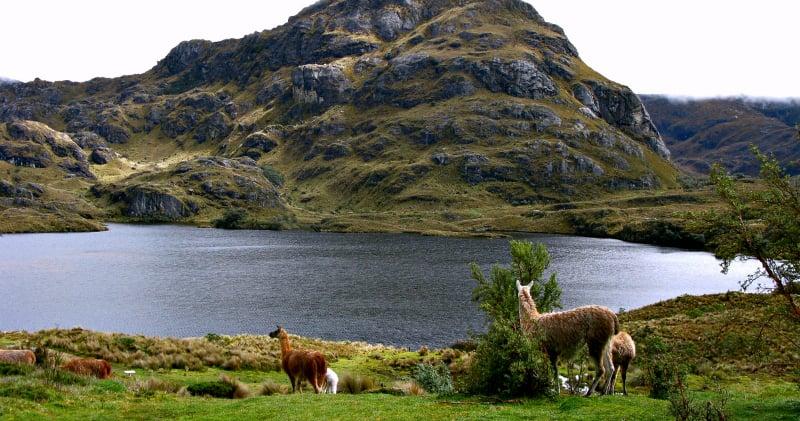 O Que Fazer em Cuenca: Parque Nacional Las Cajas
