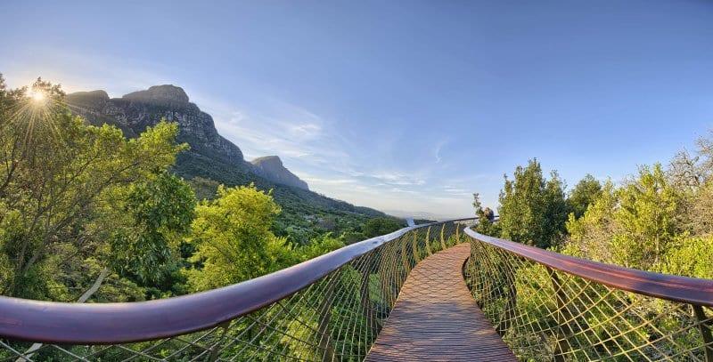 O Que Fazer na Cidade do Cabo: Kirstenbosch Botanic Gardens
