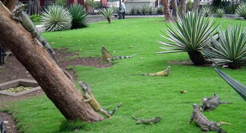 O Que Fazer em Guayaquil: Parque Seminario