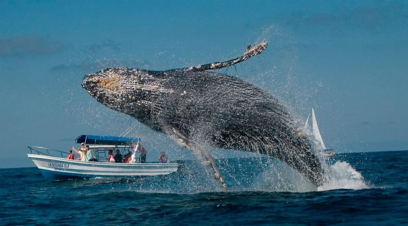 O Que Fazer em Salinas: Observe as baleias jubarte