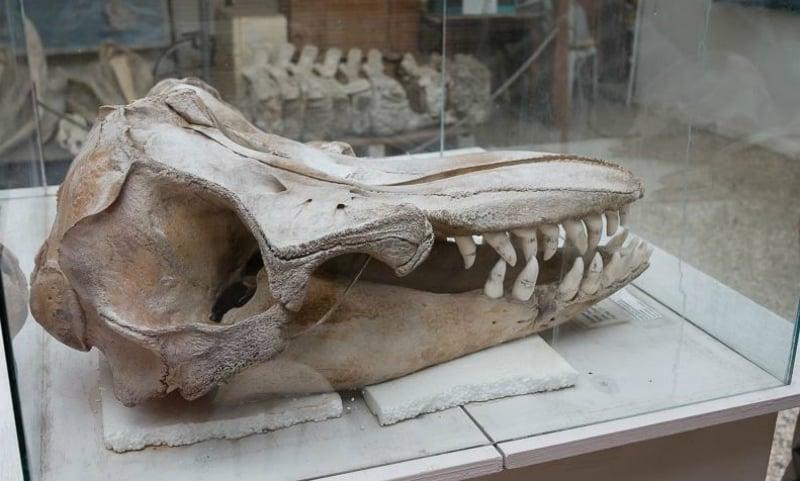 O Que Fazer em Salinas: Museu de Baleias