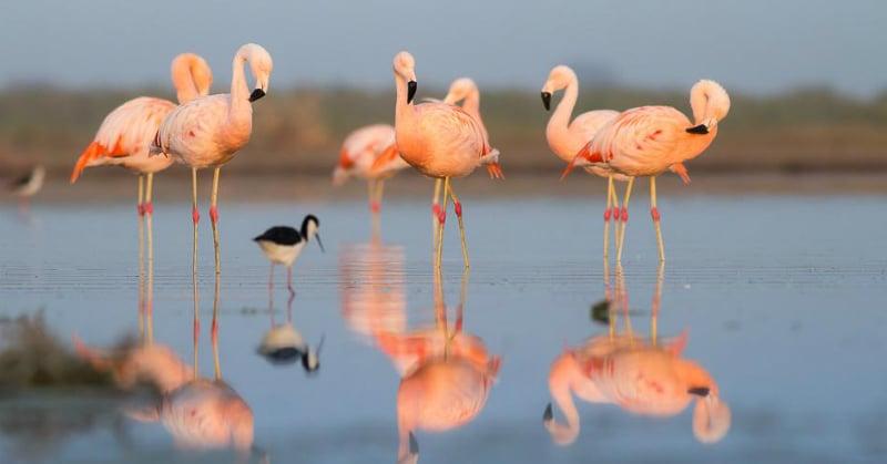 O Que Fazer em Salinas: Observe os pássaros