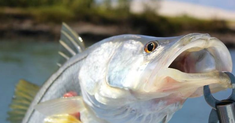O Que Fazer em Salinas: Pesca esportiva