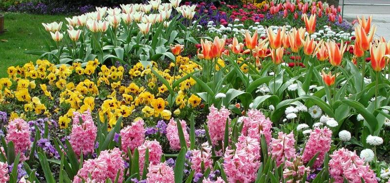 O Que Fazer em Linz: Jardim Botânico