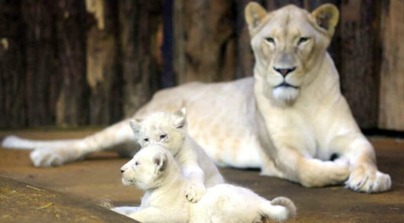 O Que Fazer em Magdeburg: Zoológico